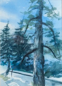 WCL - Big Bear Ponderosa Pine